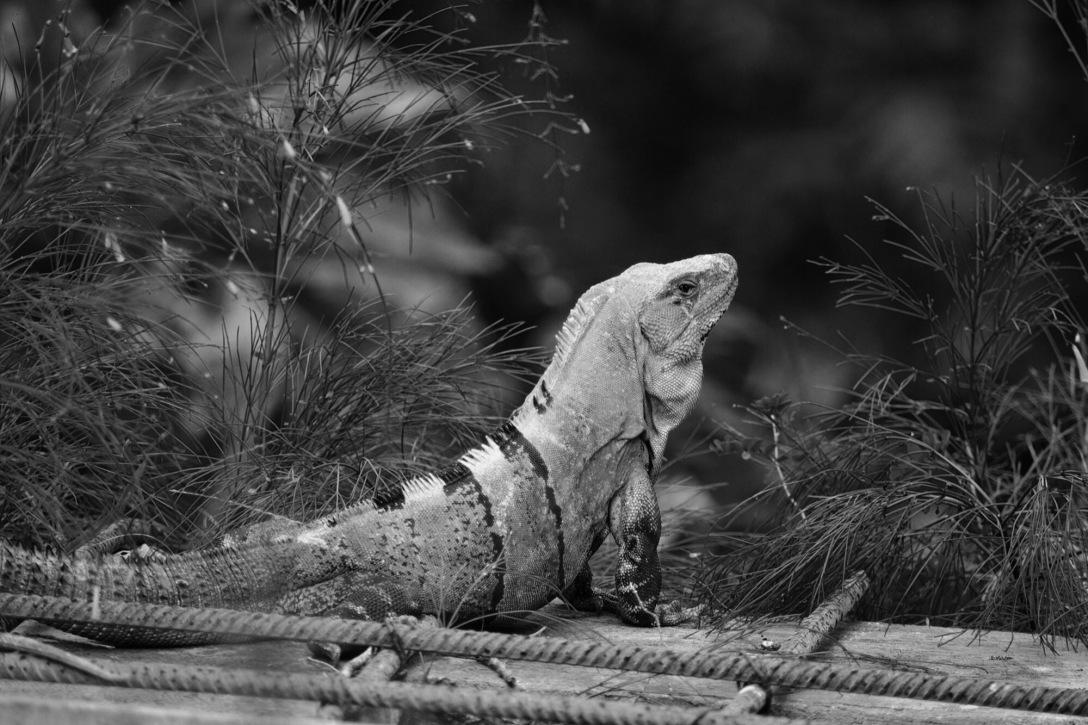 nathan-mark-rambunctious-reptile