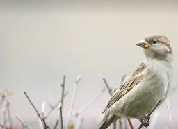 A Sparrow's Musings