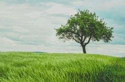 His Tree – Elizabeth Jin