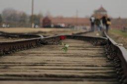 Auschwitz — Sophie Goodman