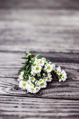Daisy Love — Talia Vyadro