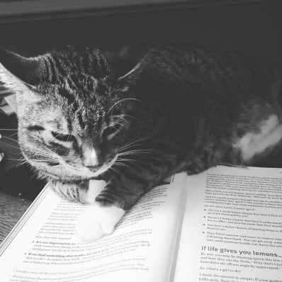 adorable animal black and white book