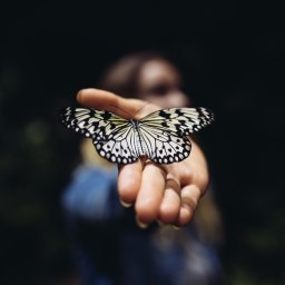 Chasing After Butterflies by Trisha Lahiry